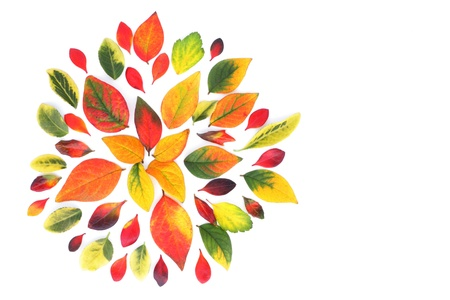 upgrowth: Beautiful decoration made from multicolored autumn leaves, background