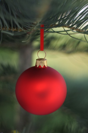 Christmas  evergreen tree and blur glass ball photo