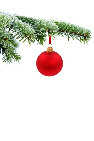 Christmas evergreen spruce tree and red glass ball photo