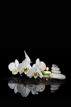 white orchid: White orchid with drop of dew on black background, nature and spa concept
