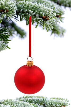 Christmas evergreen spruce tree and red glass ball on snow background photo