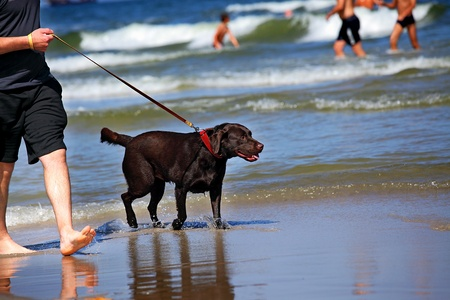 wet t shirt: Man and  his friend dog, walking on the beach    Stock Photo