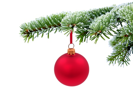 Christmas evergreen spruce tree and red glass balls on snow background Stock Photo - 11187904