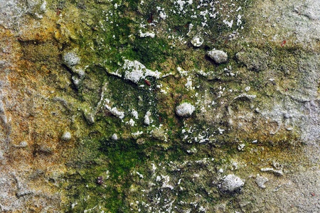 Old grunge brick wall with plaster and moss photo