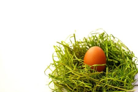 easter nest: Easter egg and spring time