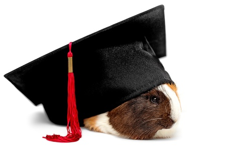Funny student of veterinary medicine, guinea pig photo