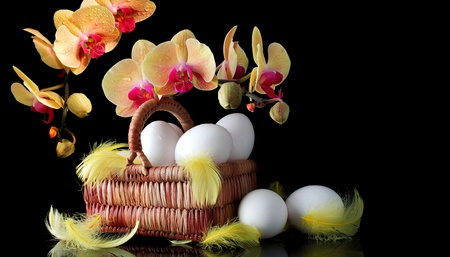 easter sunrise: Easter sunrise, white eggs and spring yellow orchid with drop of dew Stock Photo