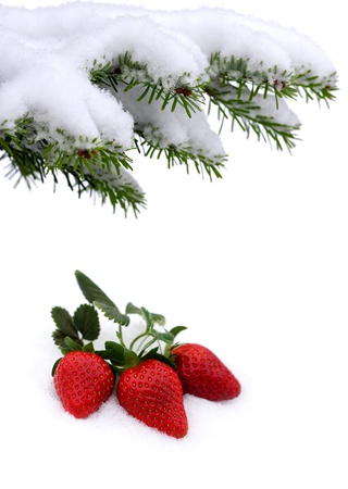strawberry tree: Fresh strawberries grow up in the snow, valentine s day and winter garden  Stock Photo