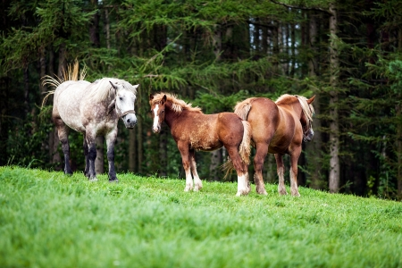 foretop: Happy horses family on green grassland