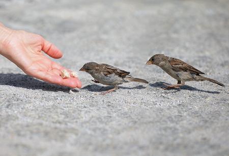 eten: Goede niemand man helpt en voedt de kleine mus, bescherming van het milieu Stockfoto