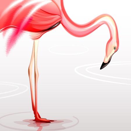Flamingo 矢量图像