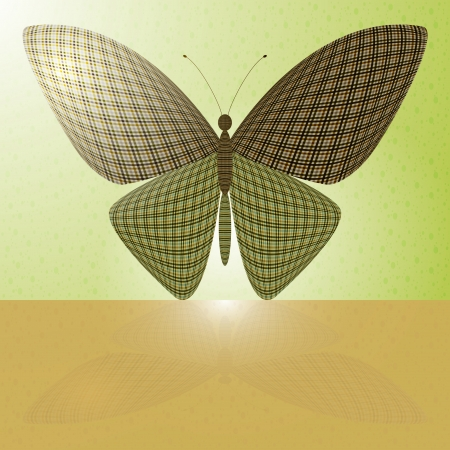 wingspan: butterfly on the wall and its reflection on a horizontal surface