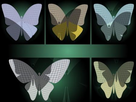 chitin: set of butterflies