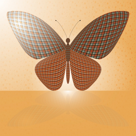 chitin: butterfly on the wall and its reflection on a horizontal surface
