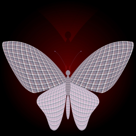wingspan: butterfly and its reflection