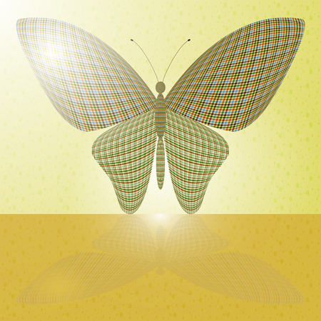 proboscis: butterfly on the wall and its reflection on a horizontal surface