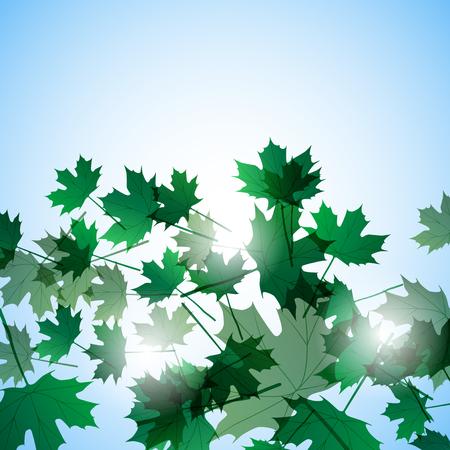 still life: Illustration autumn still life. Maple leaves. Vector background Illustration