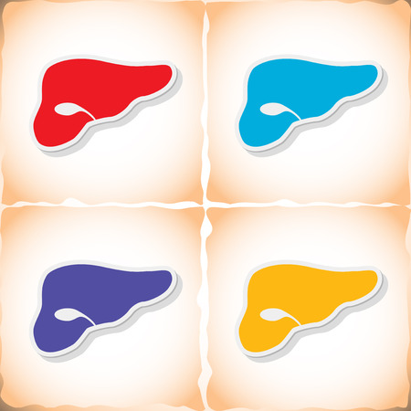 bile duct: Human liver. Flat sticker with shadow on old paper. Vector illustration