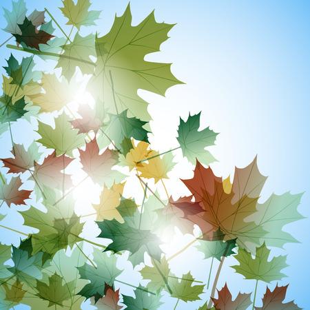 Illustration autumn still life. Maple leaves. Vector background Illustration