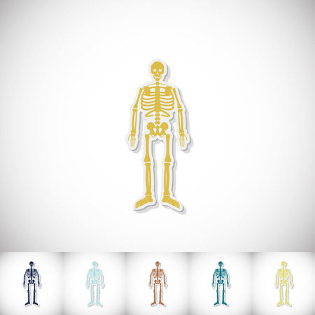 Human skeleton. Flat sticker with shadow on white background
