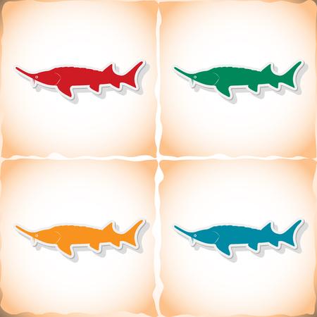 stellate: Fish stellate sturgeon. Flat sticker with shadow on old paper Illustration