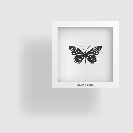 Butterfly. Abstract image of the contour object