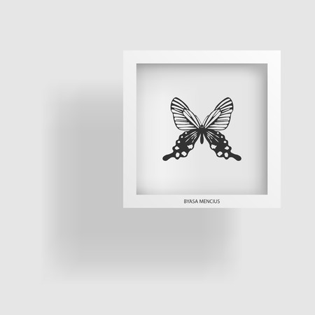 entomology: Butterfly. Abstract image of the contour object