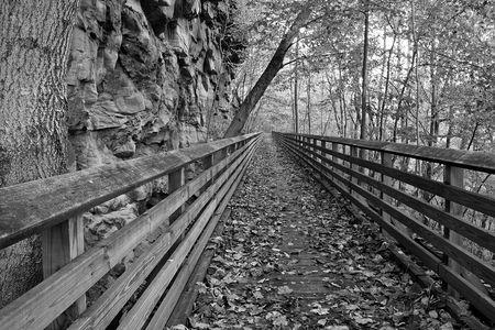 Boardwalk In The Woods photo
