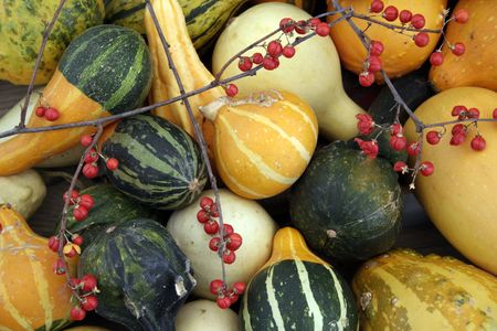Mixture Of Gourds