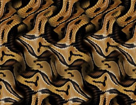 Fond transparent de peau de serpent Banque d'images - 93958209
