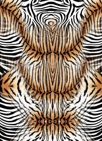 Zebra and tiger skin background
