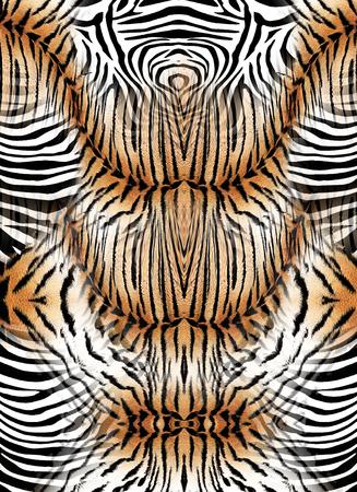 Zebra and tiger skin background
