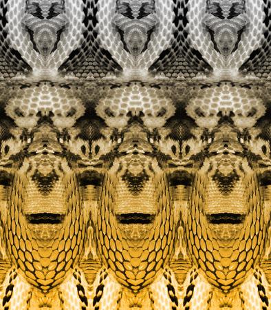 Fond transparent de peau de serpent Banque d'images - 94831118