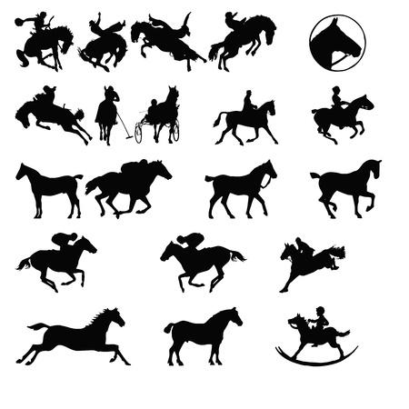 rider: at the animal