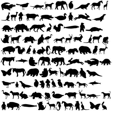 동물 아이콘