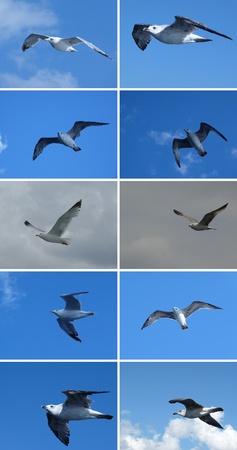 Gulls Stock Photo