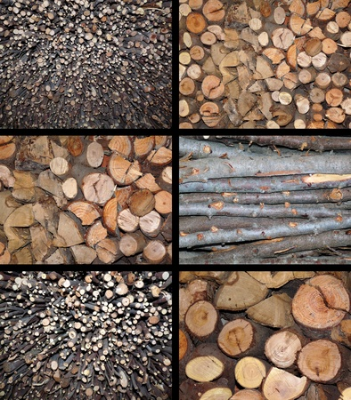 forest conservation: Firewood stacked Stock Photo