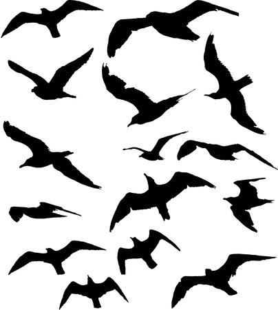 flock of birds: seagull silhouette