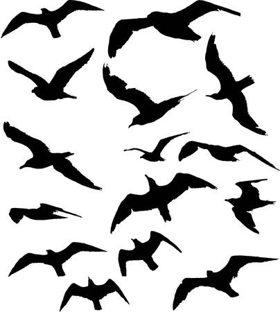 vol d oiseaux: silhouette mouette