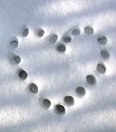 heart on snow trail photo