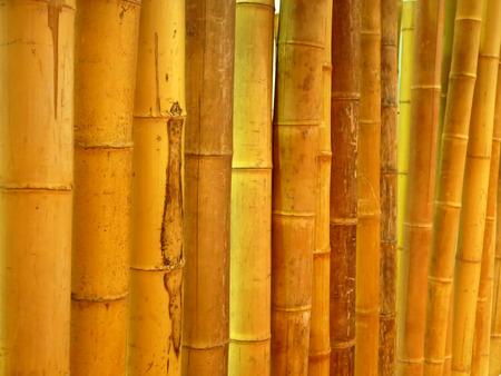cane Stock Photo