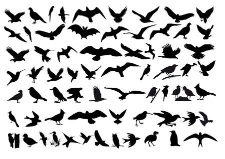 ilustracji ptaków