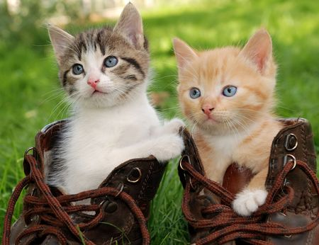 couple of little kittens sitting in boots photo