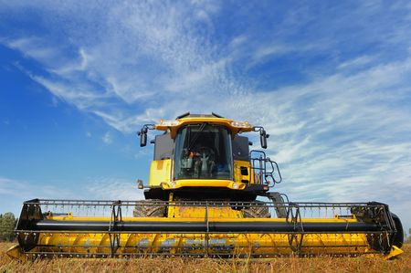 maquinaria: amarillo se combinan en el campo de trigo sarraceno en nublado el cielo azul brillante