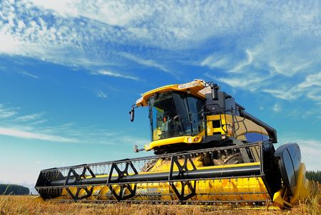 yellow combine in the field of buckwheat over bright cloudy blue sky