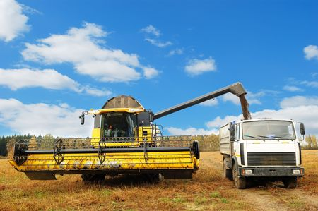 combine: yellow combine harvester in the field of buckwheat loading truck body in the field over bright cloudy blue sky Stock Photo