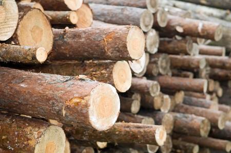 Madera de pino apiladas de madera para la construcción de edificios  Foto de archivo