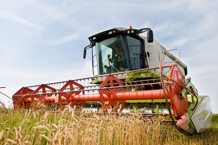 agriculture machinery: green red working harvesting combine in the field of wheat