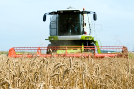reaping: close-up ears of wheat at field and harvesting machine on background. Combine out of focus Stock Photo