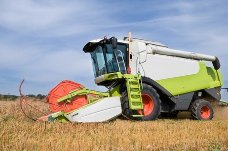 red white working harvesting combine in the field of wheat cereals in summer photo